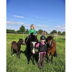 Vožení dětí na pony 30 min.